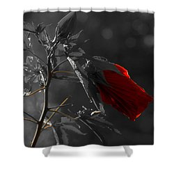 New Life Shower Curtain by Sherman Perry