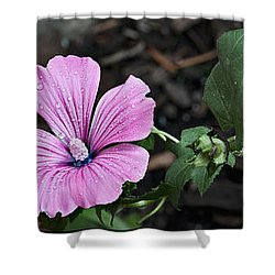 Blossoming Florets Collection Shower Curtain by Deborah Klubertanz
