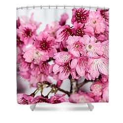 Blossoms 3 Shower Curtain