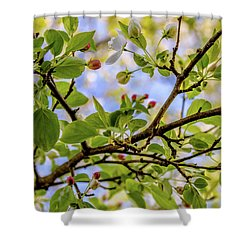 Blossoms And Leaves Shower Curtain