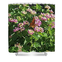 Blossoms And Wings #2 Shower Curtain by Rachel Hannah