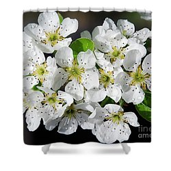 Shower Curtain featuring the photograph Blossoms by Elvira Ladocki