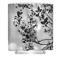 Blossoms In Black And White Shower Curtain