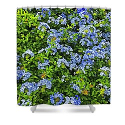 Blossoms Of Phlox Flowers Shower Curtain
