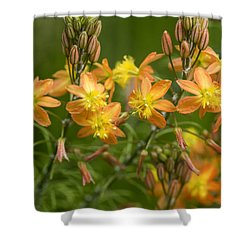 Blossoms Of Spring Shower Curtain by Stephen Anderson