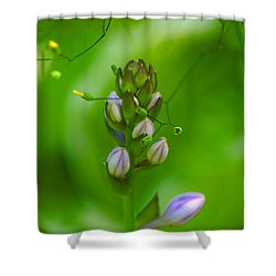 Shower Curtain featuring the photograph Blossom Dream by Ben Upham III