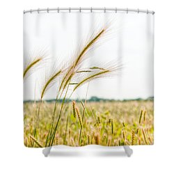 Blowing In The Wind  Shower Curtain by Alex Uhlarik