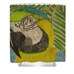 Blue And Gold Macaw Parrot Shower Curtain