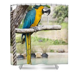Blue And Gold Macaw Shower Curtain by Ricky Dean
