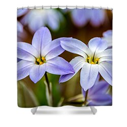 Blue And White Flowers  Shower Curtain by Martina Fagan