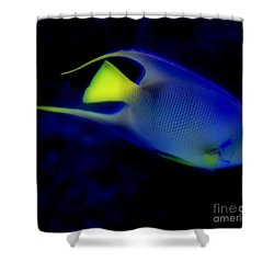 Blue And Yellow Fish Shower Curtain by Kathleen Struckle