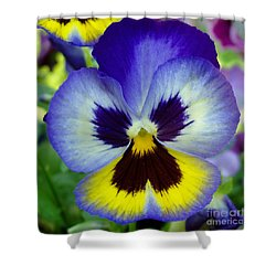 Blue And Yellow Pansy Shower Curtain by Nancy Mueller