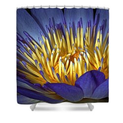 Blue And Yellow Shower Curtain