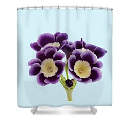 Shower Curtain featuring the photograph Blue Auricula On A Transparent Background by Paul Gulliver