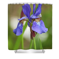Shower Curtain featuring the photograph Blue Bearded Iris by Brenda Jacobs