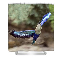 Blue-bellied Roller In Flight Shower Curtain