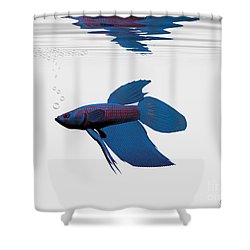 Blue Betta Shower Curtain by Corey Ford