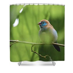 Shower Curtain featuring the photograph Blue Bird Chirping by Raphael Lopez