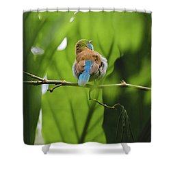 Shower Curtain featuring the photograph Blue Bird Has An Itch by Raphael Lopez