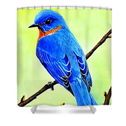 Blue Bird King Shower Curtain