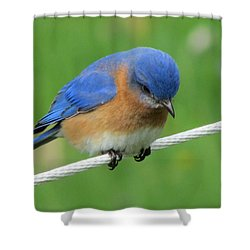 Blue Bird On Clothesline Shower Curtain by Betty Pieper