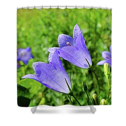Hairbell - Campanula Rotundifolia Shower Curtain