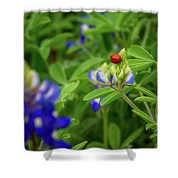 Texas Blue Bonnet And Ladybug Shower Curtain