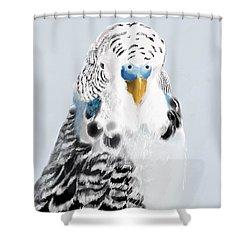Blue Budgie Shower Curtain