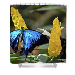 Blue Beauty Butterfly Shower Curtain