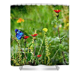 Blue Butterfly In Meadow Shower Curtain