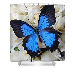 Blue Butterfly On White Roses Shower Curtain by Garry Gay