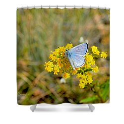 Blue Copper Butterfly Shower Curtain