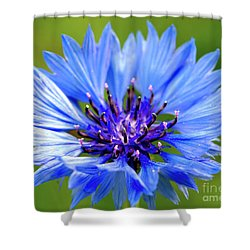 Blue Cornflower Shower Curtain