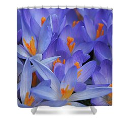 Blue Crocuses Shower Curtain