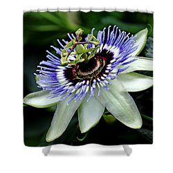 Blue Crown Passion Flower Shower Curtain