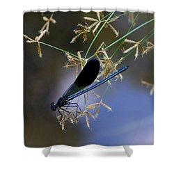 Blue Damsfly Shower Curtain