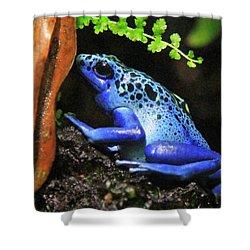 Blue Dart Frog Shower Curtain