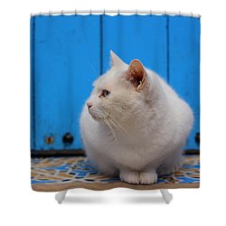 Shower Curtain featuring the photograph Blue Door White Cat by Ramona Johnston