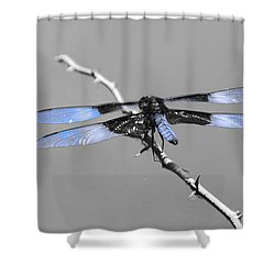 Blue Dragon Shower Curtain