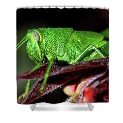 Blue Eyed Green Grasshopper 001 Shower Curtain