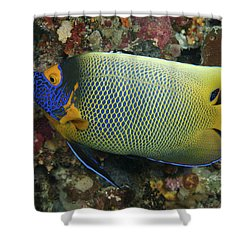 Blue Face Angelfish Shower Curtain by Steve Rosenberg - Printscapes