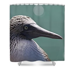 Blue Footed Booby II Shower Curtain by Dave Fleetham
