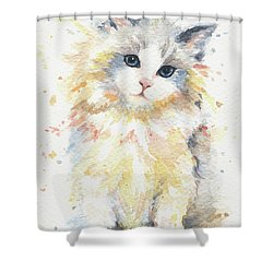 Blue-gem Ragdoll Cat Shower Curtain