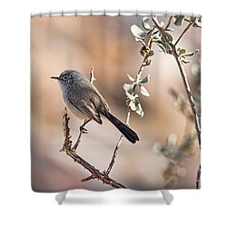 Shower Curtain featuring the photograph Black-tailed Gnatcatcher by Dan McManus