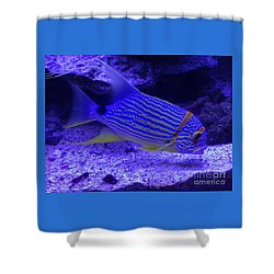 Blue Fish Groupie Shower Curtain by Richard W Linford
