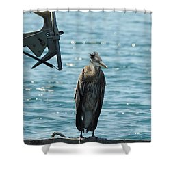 Blue Heron #1 Shower Curtain