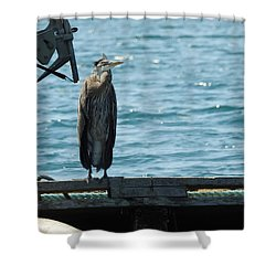 Blue Heron #3 Shower Curtain