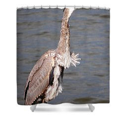 Blue Heron Calling Shower Curtain