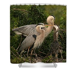 Shower Curtain featuring the photograph Blue Heron Family by Shari Jardina
