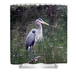Blue Heron Fishing  Shower Curtain